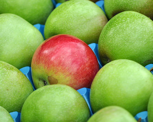 green and red apples show how gout and pseudogout are different